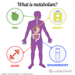 metabolism and weight loss